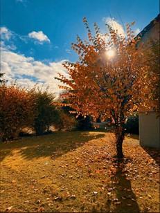 SZ: Wettbewerb Herbst